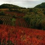 L'autunno si tinge del rosso delle vigne che ricoprono il Collio