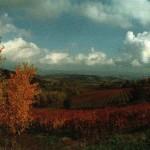 Le colline del Collio declinano verso la vicina Slovenia